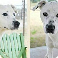 Adopt A Pet :: Harper - Evans, GA