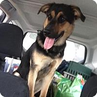 Adopt A Pet :: Jager - Baltimore, MD