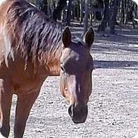 Adopt A Pet :: Ruger - Elverta, CA
