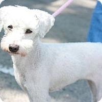 Adopt A Pet :: Princess - Canoga Park, CA
