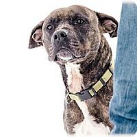 Terrier (Unknown Type, Medium) Mix Dog for adoption in Lake Odessa, Michigan - Tatiana