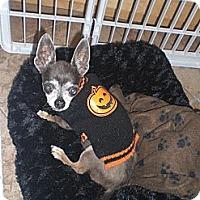 Adopt A Pet :: Charlie - Rescue, CA