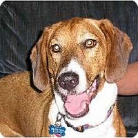 Adopt A Pet :: Desmond - Phoenix, AZ