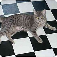 Adopt A Pet :: Sky kitty - Cincinnati, OH
