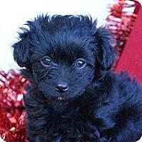 Adopt A Pet :: NATALIE - Torrance, CA