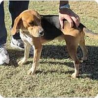 Adopt A Pet :: Hershey (aka Mr Freeze) - Phoenix, AZ