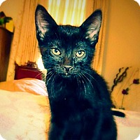 Adopt A Pet :: San Bernadino - Green Bay, WI