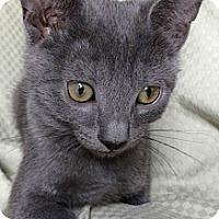 Adopt A Pet :: Flash - Modesto, CA