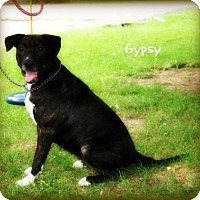 Adopt A Pet :: Gypsy - Cincinnati, OH