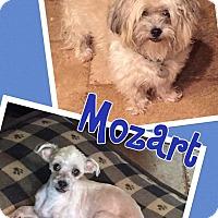 Adopt A Pet :: Mozart - Scottsdale, AZ
