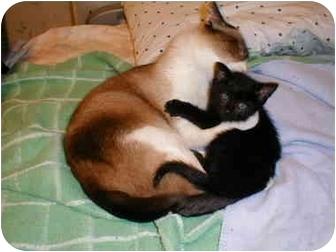 Domestic Mediumhair Kitten for adoption in Proctor, Minnesota - Balder