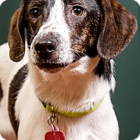 Adopt A Pet :: Jake - DRD program - Owensboro, KY
