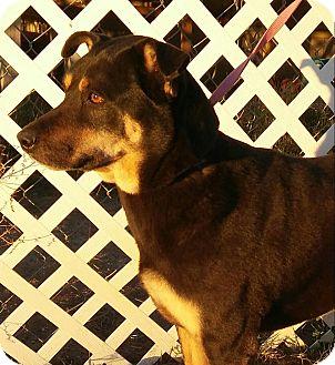 Shepherd (Unknown Type) Mix Dog for adoption in Phoenix, Arizona - Iris