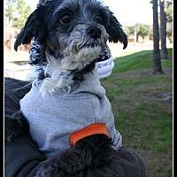 Adopt A Pet :: Jules - Houston, TX