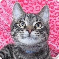Adopt A Pet :: Norvin - Lloydminster, AB