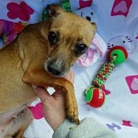 Adopt A Pet :: Tinkerbell - Seaford, DE