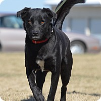 Adopt A Pet :: Mike - Ottumwa, IA