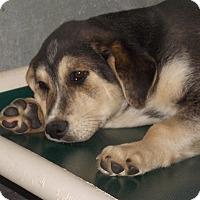 Adopt A Pet :: Alabama - Mount Holly, NJ