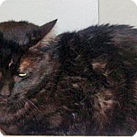 Adopt A Pet :: Gus - Wildomar, CA