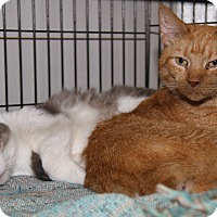 Adopt A Pet :: Frizzie & Bobby (Bonded Pair) - Marietta, OH