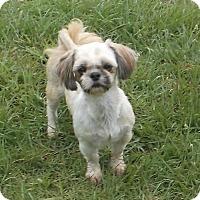 Adopt A Pet :: Lickie - Bonifay, FL