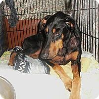 Adopt A Pet :: Magic--pending - New Richmond, OH