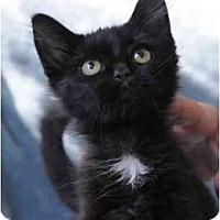 Adopt A Pet :: Love Bug - Columbus, OH