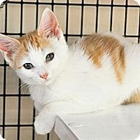 Adopt A Pet :: Donna - Bradenton, FL