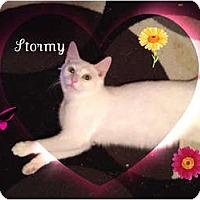 Adopt A Pet :: Stormy - Mobile, AL