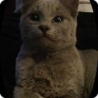 Adopt A Pet :: Corduroy - Oxnard, CA