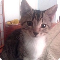 Adopt A Pet :: Simon - Kirkwood, DE