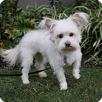 Adopt A Pet :: BART - Newport Beach, CA