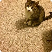 Adopt A Pet :: Schmooze - Burlington, NC