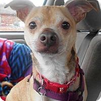 Adopt A Pet :: Pee Wee - Kalamazoo, MI