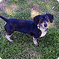 Adopt A Pet :: Pepper - Bryan, TX