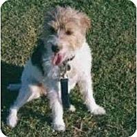 Adopt A Pet :: Ricca - Scottsdale, AZ