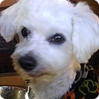 Adopt A Pet :: Guido - Farmingtoon, MO