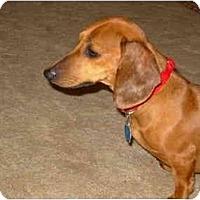 Adopt A Pet :: Libby - Bryan, TX