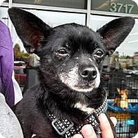 Adopt A Pet :: Beebee - Seattle, WA