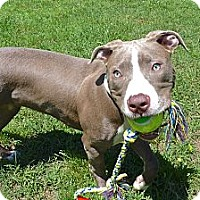 Adopt A Pet :: Champagne - Reisterstown, MD