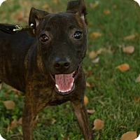 Adopt A Pet :: Brisk - Scottsdale, AZ