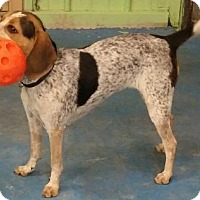 Adopt A Pet :: Missy - Oberlin, OH