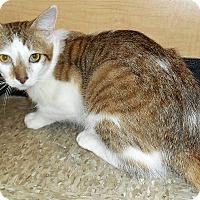 Adopt A Pet :: Dipstick - Chattanooga, TN