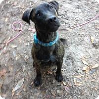 Adopt A Pet :: Rusty - Groveland, FL