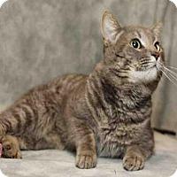 Adopt A Pet :: TAB - Waynesville, NC