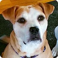 Adopt A Pet :: Dandy - PENDING - Grafton, WI