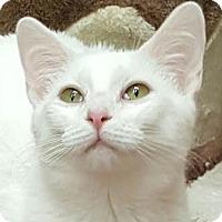 Adopt A Pet :: Bryne - Walworth, NY