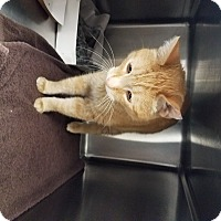 Adopt A Pet :: Sherbert - Indianapolis, IN