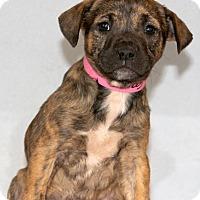Adopt A Pet :: Garnet - Waldorf, MD