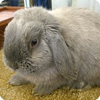 Adopt A Pet :: Greyson - Seattle c/o Kingston 98346/ Washington State, WA